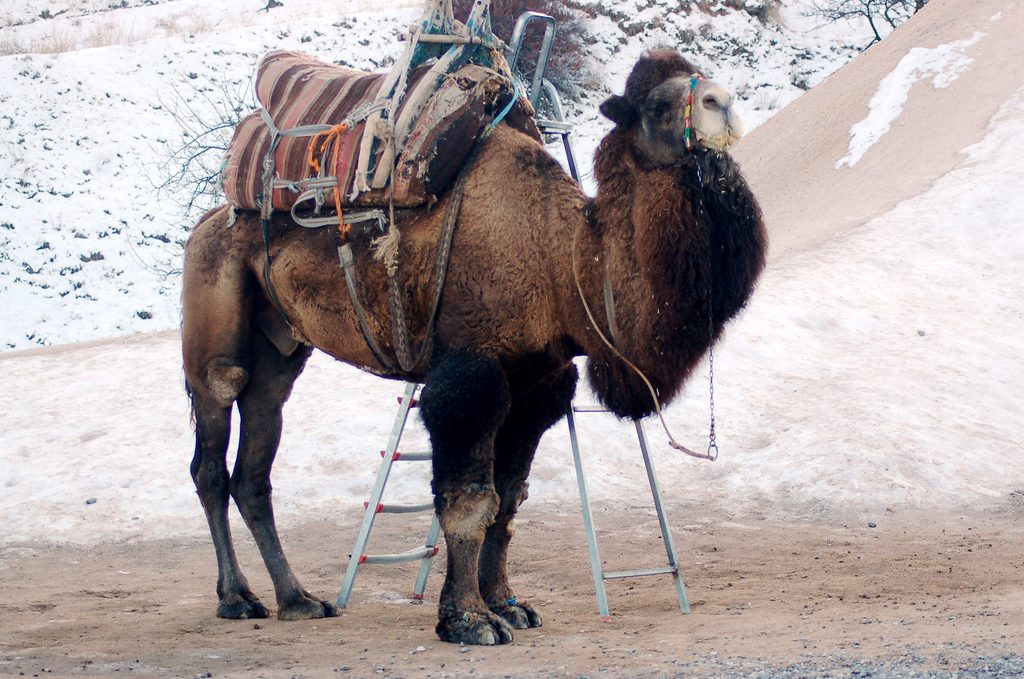 Are you ready to carry as much stuff as this camel in Cappadocia?