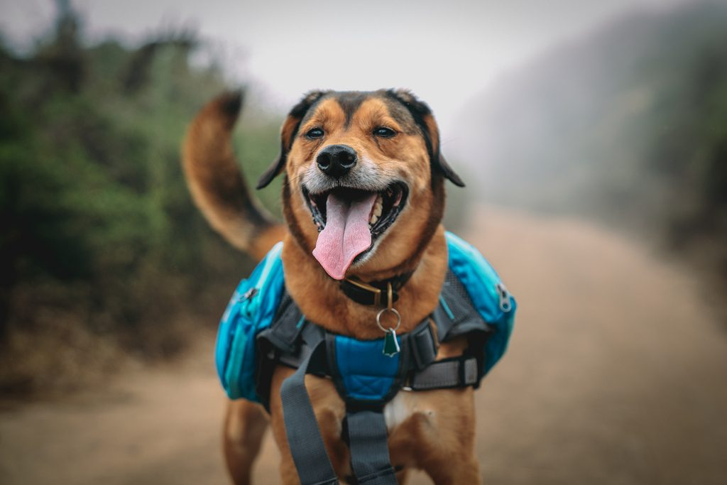 Who will be happier about your trip - you or your dog?