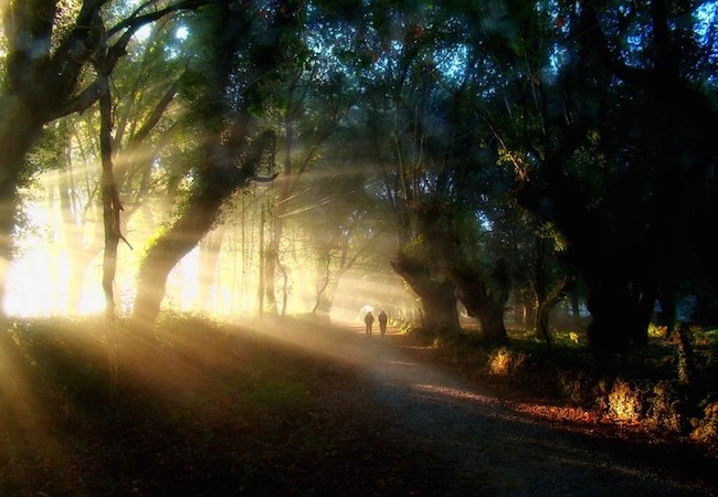 Camino Francés - Sunlight in the forest between Barbadelo & Morgade