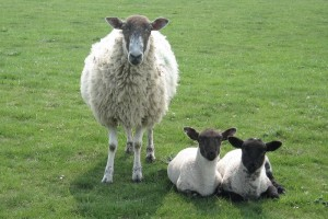 Friendly residents of Cleeve Hill