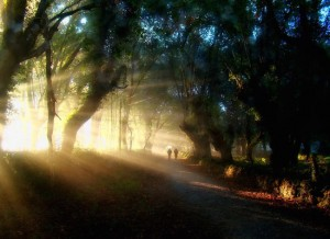 Camino Francés - Sunlight in the forest between Barbadelo & Morgade