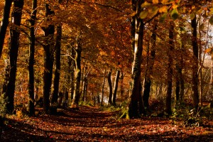 Autumn on the Cotswold Way between Wotton-Under-Edge & North Nibley