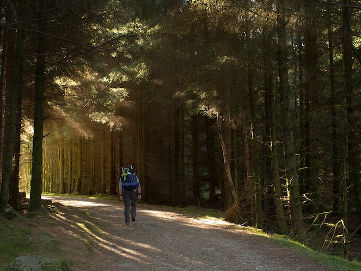 Woodland walking on WHW